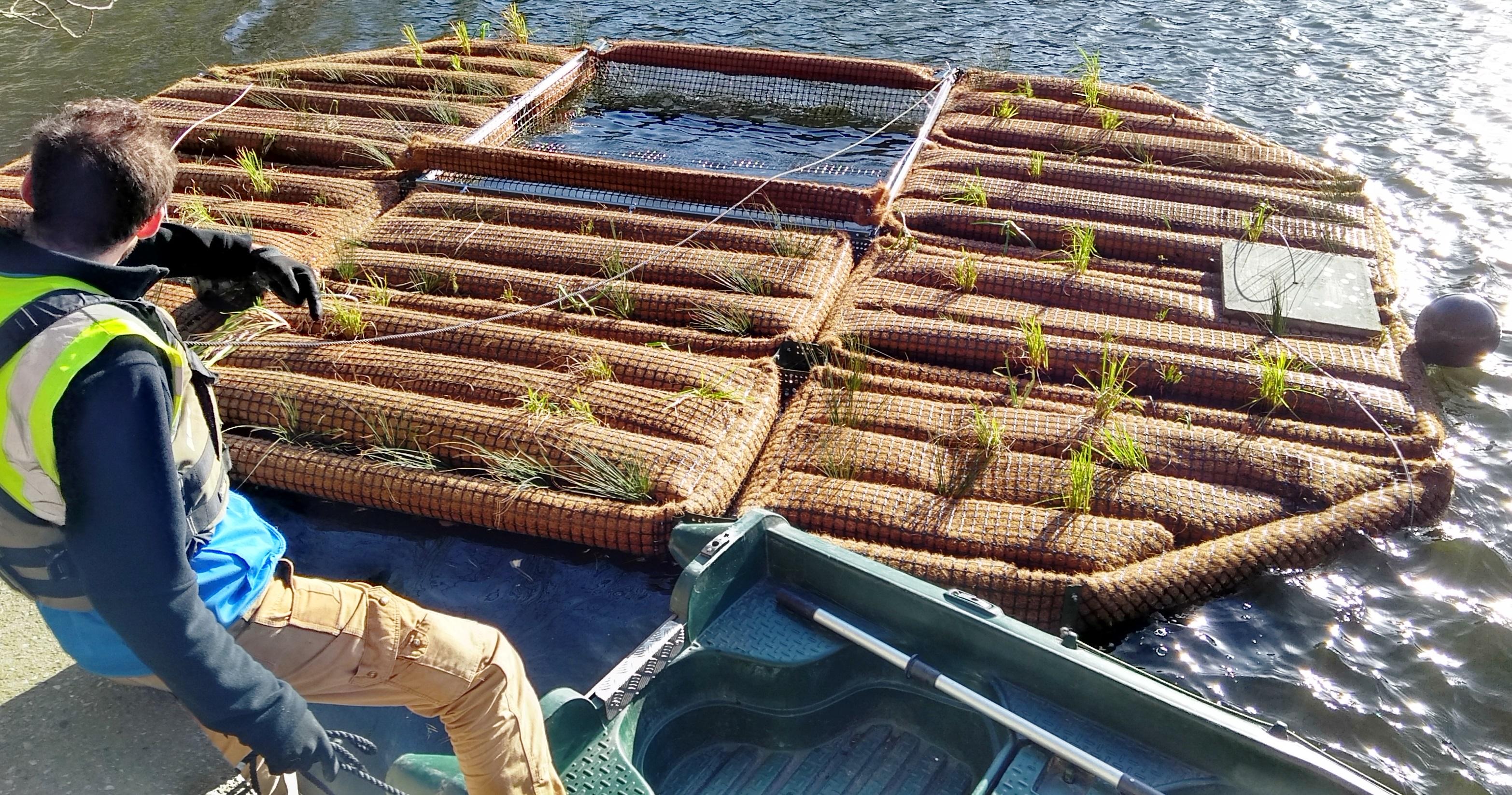 floating island ecosystem close up